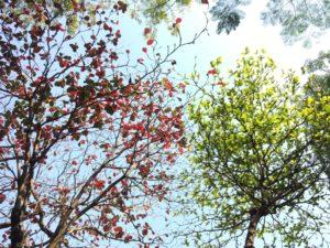 Change Management – Veränderungen erfolgreich und nachhaltig umsetzen